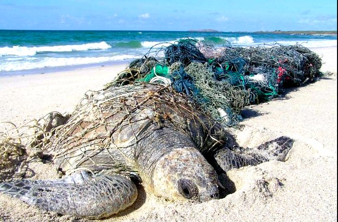 Chiswick ReConfined & ReConstrained – Endangered Sea Turtle Initiative